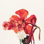 Hibiscus, tres Campsis, Gymnocalycium y Flor de Lis, 2014