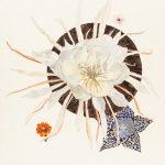 Epiphyllum oxypetalum, Flor de nacar, Orbea, Lazo de amor y Zinnia peruviana, 2015