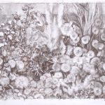 Jardín de cuatro cardos, 2005. Carbón, 55 x 73 cm