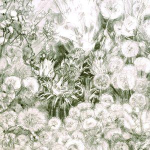 Jardín de cuatro cardos, 2005. Carbón, 50 x 70 cm