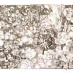 Jardín de cuatro cardos II, 2005. Carbón, 50 x 69 cm