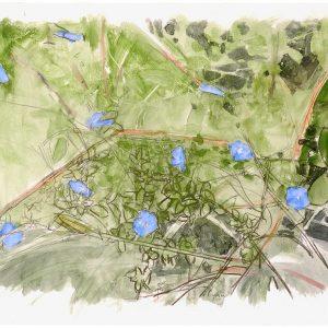 Otro día, diez flores azules, 2008. Carbón, acuarela y temple de cera, 50 x 70 cm
