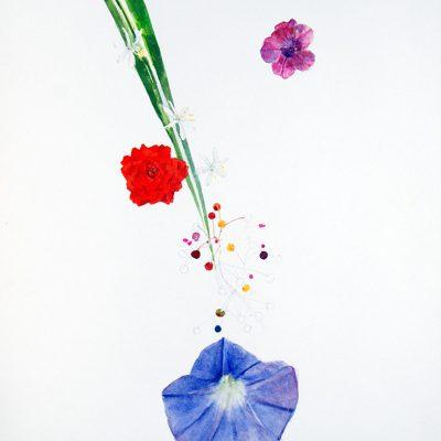 Lazo de amor, Rosa, Talinum, Ipomea y Ruellia