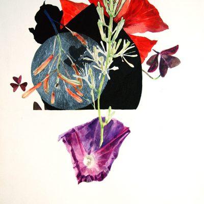 Flor de Sansevieria, Ipomea, Treboles, 2016. Acuarela, 31 x 23 cm