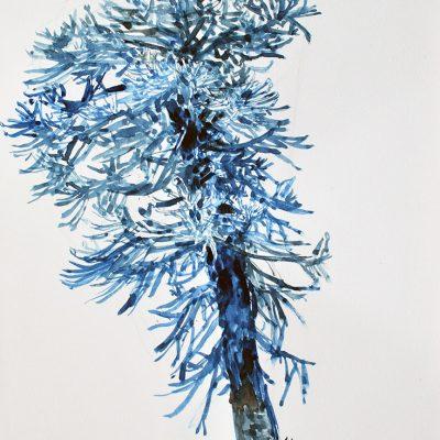 Araucaria, 2012. Acuarela, 31 x 23 cm