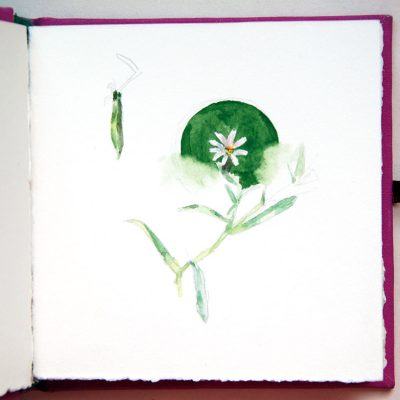 Libro fuxia, Flores, 2013-14. Acuarela sobre papel, 10 x 10 cm