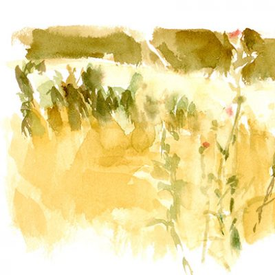 Pastizal con cardos II, 2005. Acuarela, 20 x 36 cm
