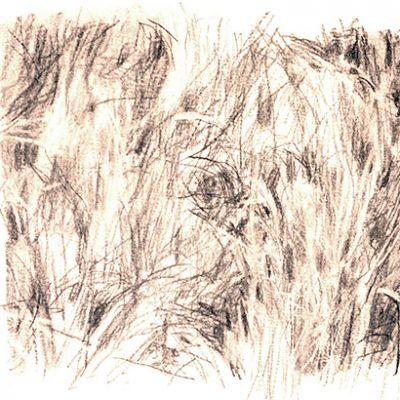 Composición Nro. 5, 2004. Carbón, 24 x 42 cm