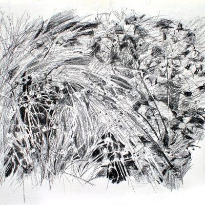 Pastos, 2007. Carbón, 56 x 76 cm