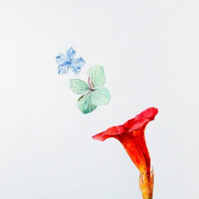 Hydrangea y Campsis, 2016